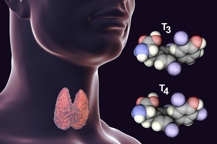 thyroid gland in neck T3 and T4 hormones